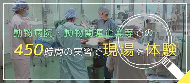 動物病院・動物関連企業等での450時間の実習で現場を体験